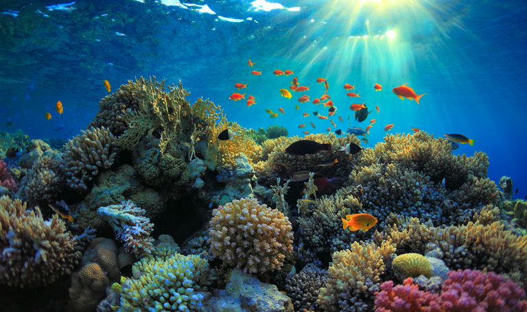 Investing in Coral Reefs